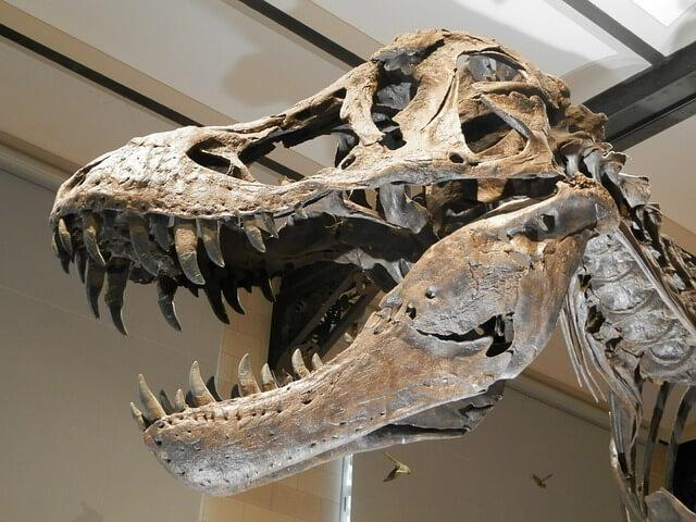 恐竜博物館の恐竜は迫力満点